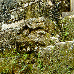 A close up of a skull from the Temple of Skulls at Tikal
