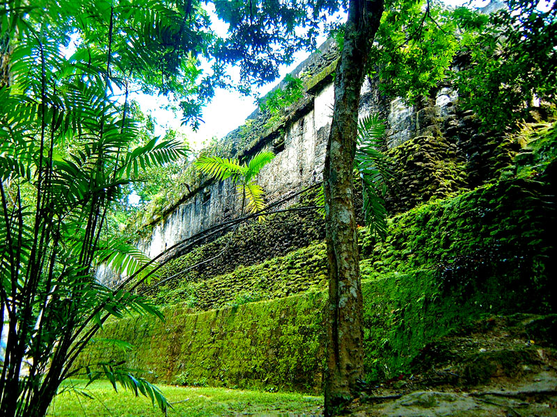 The rear wall of the Bat Palace at Tikal