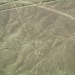 The Condor at the Nasca Lines